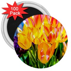 Festival Of Tulip Flowers 3  Magnets (100 Pack) by FunnyCow