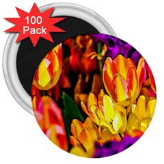 Fancy Tulip Flowers In Spring 3  Magnets (100 Pack) by FunnyCow