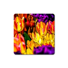 Fancy Tulip Flowers In Spring Square Magnet by FunnyCow
