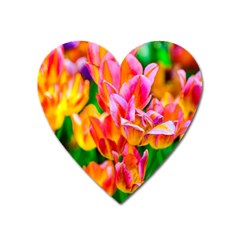 Blushing Tulip Flowers Heart Magnet by FunnyCow