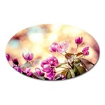 Paradise Apple Blossoms Oval Magnet Front