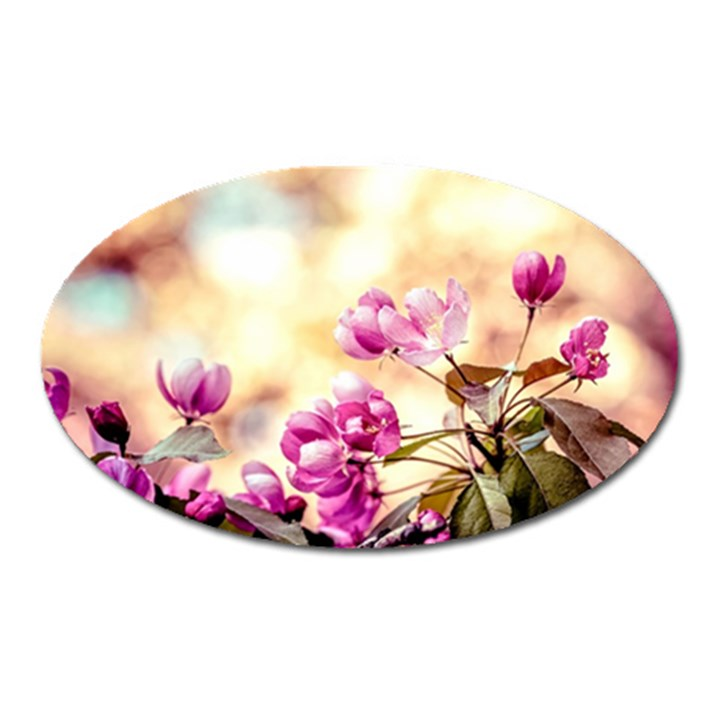 Paradise Apple Blossoms Oval Magnet