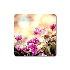 Paradise Apple Blossoms Square Magnet
