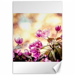 Paradise Apple Blossoms Canvas 12  X 18