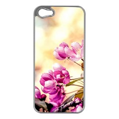 Paradise Apple Blossoms Apple Iphone 5 Case (silver) by FunnyCow