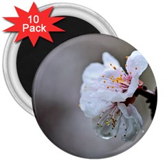 Rainy Day Of Hanami Season 3  Magnets (10 Pack)  by FunnyCow
