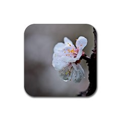 Rainy Day Of Hanami Season Rubber Square Coaster (4 Pack)  by FunnyCow