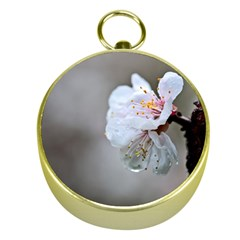 Rainy Day Of Hanami Season Gold Compasses by FunnyCow