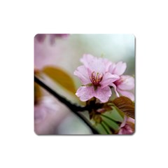Soft Rains Of Spring Square Magnet by FunnyCow