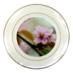 Soft Rains Of Spring Porcelain Plates by FunnyCow