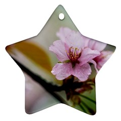 Soft Rains Of Spring Star Ornament (two Sides) by FunnyCow