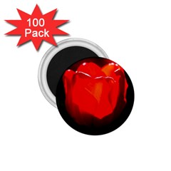 Red Tulip A Bowl Of Fire 1 75  Magnets (100 Pack)  by FunnyCow