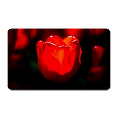Red Tulip A Bowl Of Fire Magnet (rectangular) by FunnyCow