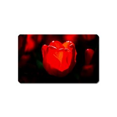 Red Tulip A Bowl Of Fire Magnet (name Card) by FunnyCow