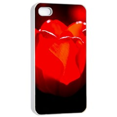 Red Tulip A Bowl Of Fire Apple Iphone 4/4s Seamless Case (white) by FunnyCow