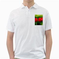 Three Red Tulips, Green Background Golf Shirt