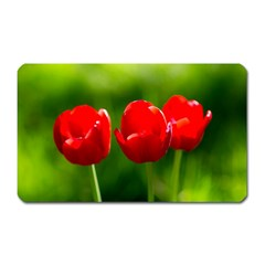 Three Red Tulips, Green Background Magnet (rectangular) by FunnyCow