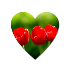 Three Red Tulips, Green Background Heart Magnet by FunnyCow