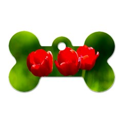Three Red Tulips, Green Background Dog Tag Bone (one Side)
