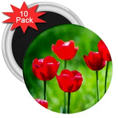 Red Tulip Flowers, Sunny Day 3  Magnets (10 Pack)