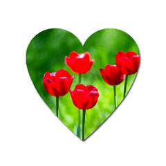Red Tulip Flowers, Sunny Day Heart Magnet by FunnyCow
