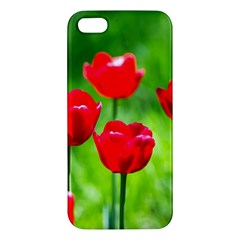 Red Tulip Flowers, Sunny Day Iphone 5s/ Se Premium Hardshell Case by FunnyCow