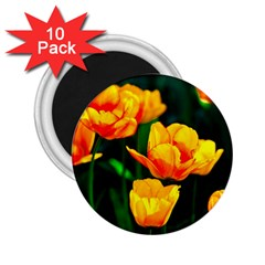 Yellow Orange Tulip Flowers 2 25  Magnets (10 Pack)  by FunnyCow