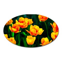 Yellow Orange Tulip Flowers Oval Magnet by FunnyCow