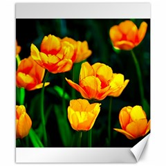 Yellow Orange Tulip Flowers Canvas 8  X 10  by FunnyCow