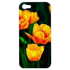 Yellow Orange Tulip Flowers Apple Iphone 5 Hardshell Case by FunnyCow