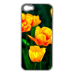 Yellow Orange Tulip Flowers Apple Iphone 5 Case (silver) by FunnyCow