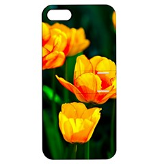 Yellow Orange Tulip Flowers Apple Iphone 5 Hardshell Case With Stand by FunnyCow