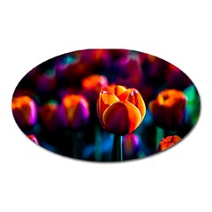 Red Tulips Oval Magnet by FunnyCow