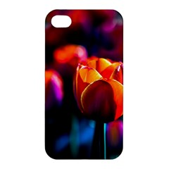 Red Tulips Apple Iphone 4/4s Hardshell Case