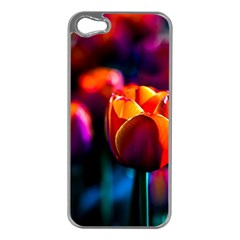 Red Tulips Apple Iphone 5 Case (silver) by FunnyCow
