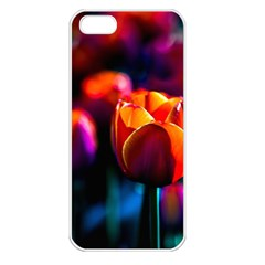 Red Tulips Apple Iphone 5 Seamless Case (white) by FunnyCow
