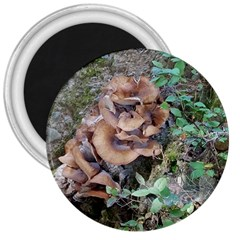 Abstract Of Mushroom 3  Magnets