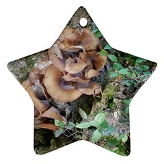 Abstract Of Mushroom Ornament (star) by canvasngiftshop