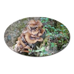 Abstract Of Mushroom Oval Magnet