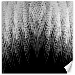 Feather Graphic Design Background Canvas 12  X 12  by Nexatart