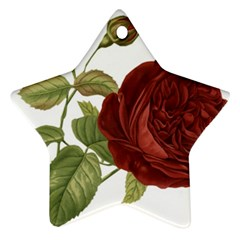 Rose 1077964 1280 Ornament (star) by vintage2030