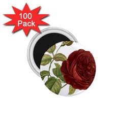 Rose 1077964 1280 1 75  Magnets (100 Pack)  by vintage2030