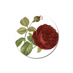 Rose 1077964 1280 Magnet 3  (round) by vintage2030