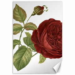 Rose 1077964 1280 Canvas 12  X 18  by vintage2030