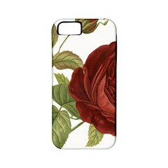 Rose 1077964 1280 Apple Iphone 5 Classic Hardshell Case (pc+silicone) by vintage2030