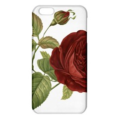 Rose 1077964 1280 Iphone 6 Plus/6s Plus Tpu Case by vintage2030
