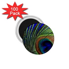 Peacock Feather Macro Peacock Bird 1 75  Magnets (100 Pack)