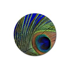 Peacock Feather Macro Peacock Bird Magnet 3  (round) by Simbadda