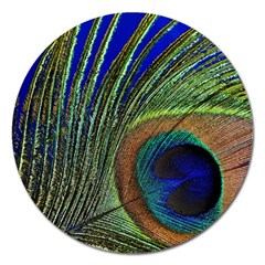 Peacock Feather Macro Peacock Bird Magnet 5  (round) by Simbadda