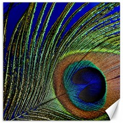 Peacock Feather Macro Peacock Bird Canvas 12  X 12